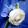 Blue and White Buttonhole