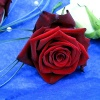 Buttonhole - red rose